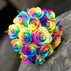 زهور أروما