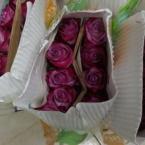 بوكس الورود