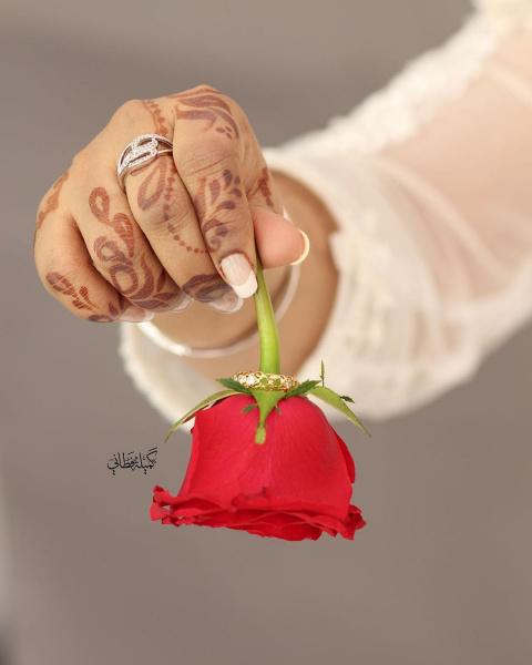 كاميليا الورد فوتوغرافي