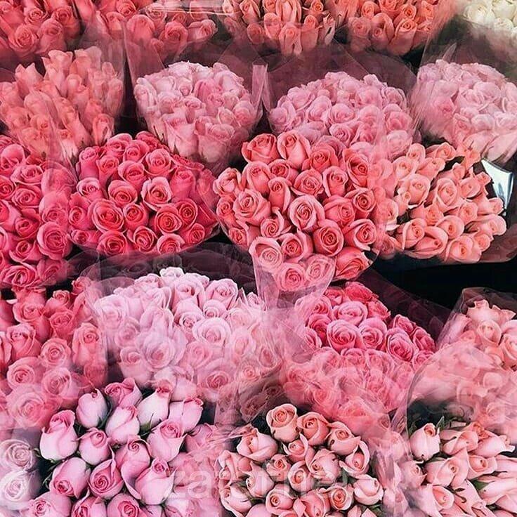 عالم الورود